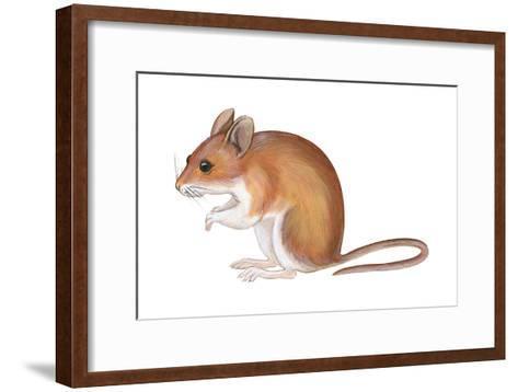 Golden Mouse (Peromyscus Nuttalli), Mammals-Encyclopaedia Britannica-Framed Art Print