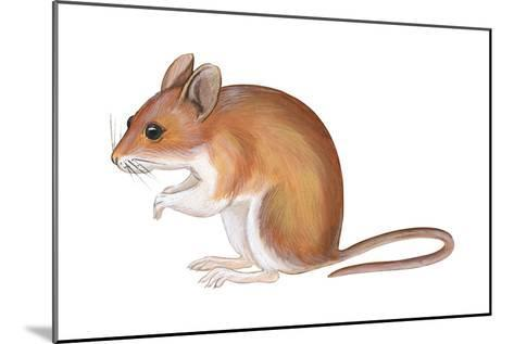 Golden Mouse (Peromyscus Nuttalli), Mammals-Encyclopaedia Britannica-Mounted Art Print