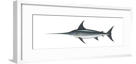 Swordfish (Xiphias Gladius), Fishes-Encyclopaedia Britannica-Framed Art Print