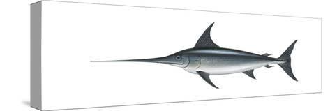 Swordfish (Xiphias Gladius), Fishes-Encyclopaedia Britannica-Stretched Canvas Print