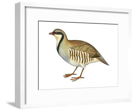 Chukar, Partridge (Alectoris Chukar), Birds-Encyclopaedia Britannica-Framed Art Print