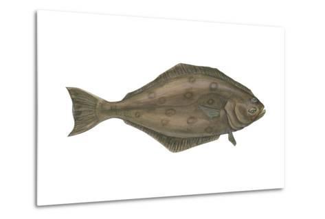 Halibut (Hippoglossus Hippoglossus), Fishes-Encyclopaedia Britannica-Metal Print