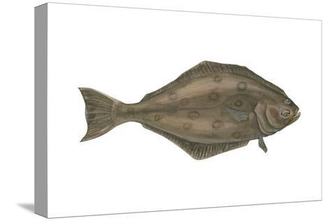 Halibut (Hippoglossus Hippoglossus), Fishes-Encyclopaedia Britannica-Stretched Canvas Print