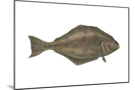 Halibut (Hippoglossus Hippoglossus), Fishes-Encyclopaedia Britannica-Mounted Art Print