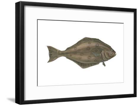 Halibut (Hippoglossus Hippoglossus), Fishes-Encyclopaedia Britannica-Framed Art Print