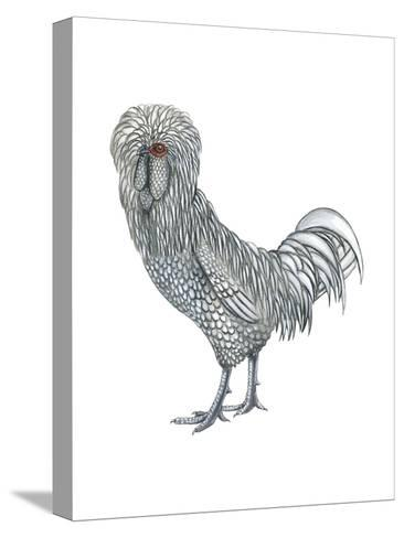 Polish (Gallus Gallus Domesticus), Rooster, Poultry, Birds-Encyclopaedia Britannica-Stretched Canvas Print