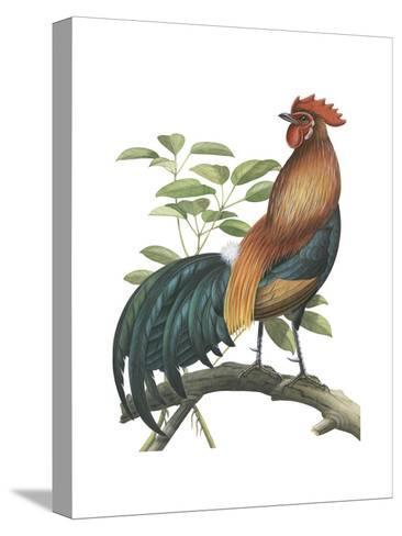 Red Jungle Fowl (Gallus Gallus), Birds-Encyclopaedia Britannica-Stretched Canvas Print