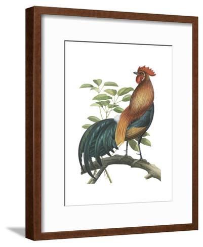 Red Jungle Fowl (Gallus Gallus), Birds-Encyclopaedia Britannica-Framed Art Print