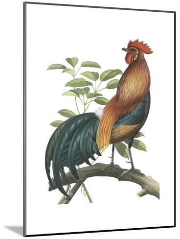 Red Jungle Fowl (Gallus Gallus), Birds-Encyclopaedia Britannica-Mounted Art Print