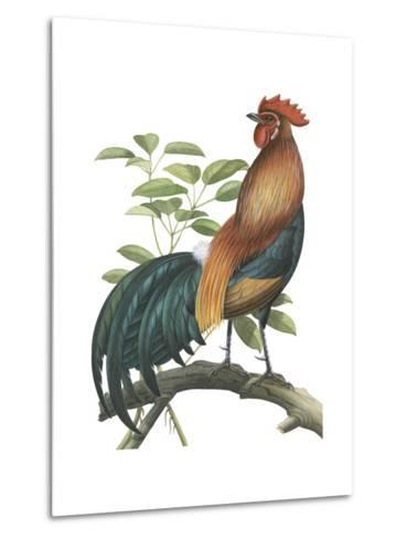 Red Jungle Fowl (Gallus Gallus), Birds-Encyclopaedia Britannica-Metal Print