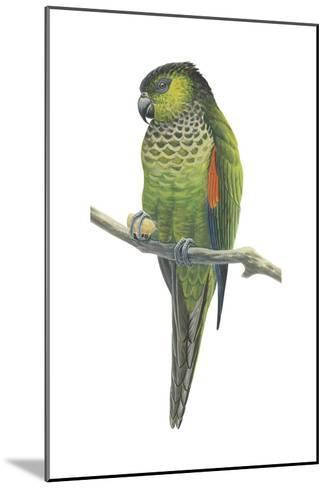 Rock Parakeet (Pyrrhura Rupicola), Birds-Encyclopaedia Britannica-Mounted Art Print