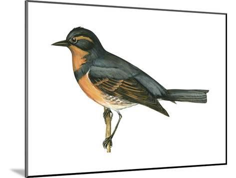 Varied Thrush (Ixoreus Naevius), Birds-Encyclopaedia Britannica-Mounted Art Print