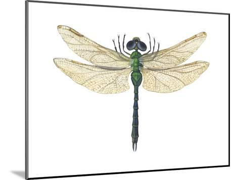 Green Darner Dragonfly (Anax Junius), Insects-Encyclopaedia Britannica-Mounted Art Print