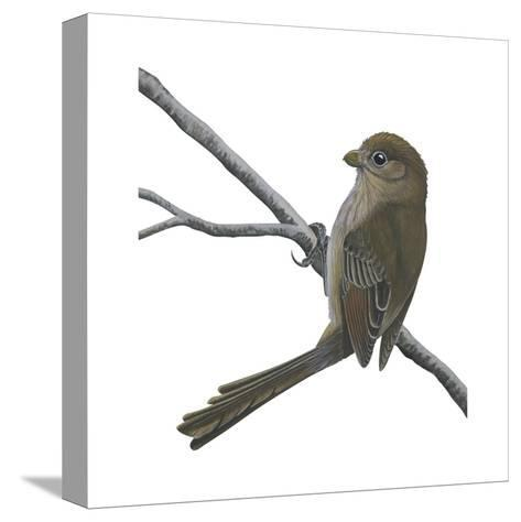 Vinous-Throated Parrotbill (Paradoxornis Webbiana), Birds-Encyclopaedia Britannica-Stretched Canvas Print