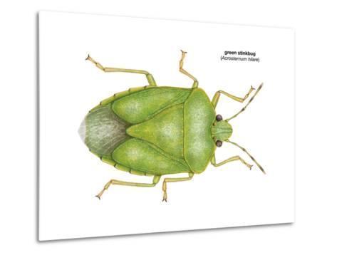 Green Stinkbug (Acrosternum Hilare), Insects-Encyclopaedia Britannica-Metal Print