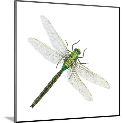 Green Darner - Female (Anax Junius), Dragonfly, Insects-Encyclopaedia Britannica-Mounted Art Print