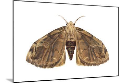 Tussock Moth (Hemerocampa Leucostigma), Insects-Encyclopaedia Britannica-Mounted Art Print