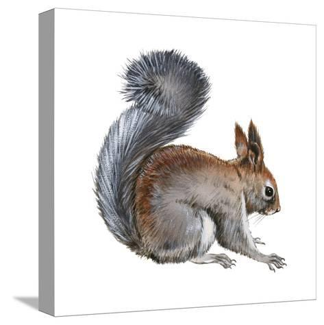 Abert's Squirrel (Sciurus Aberti), Mammals-Encyclopaedia Britannica-Stretched Canvas Print