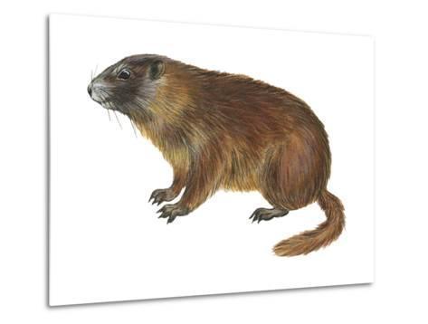 Yellow-Bellied Marmot (Marmota Flaviventris), Mammals-Encyclopaedia Britannica-Metal Print