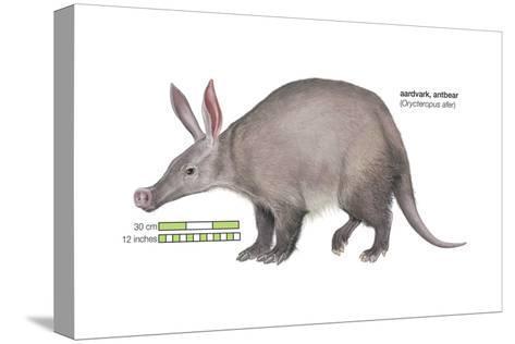 Aardvark or Antbear (Orycteropus Afer), Mammals-Encyclopaedia Britannica-Stretched Canvas Print
