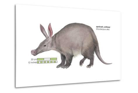 Aardvark or Antbear (Orycteropus Afer), Mammals-Encyclopaedia Britannica-Metal Print