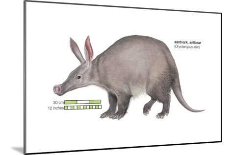 Aardvark or Antbear (Orycteropus Afer), Mammals-Encyclopaedia Britannica-Mounted Art Print