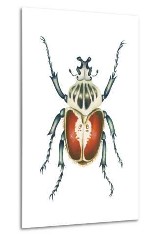 African Goliath Beetle (Goliathus Giganteus), Insects-Encyclopaedia Britannica-Metal Print
