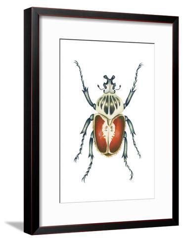 African Goliath Beetle (Goliathus Giganteus), Insects-Encyclopaedia Britannica-Framed Art Print