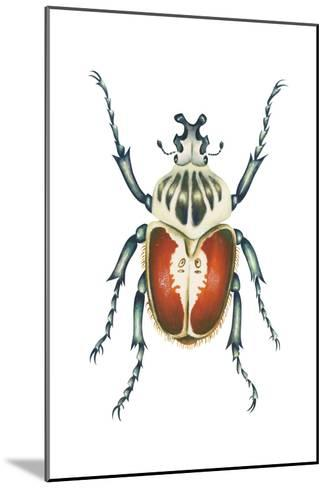 African Goliath Beetle (Goliathus Giganteus), Insects-Encyclopaedia Britannica-Mounted Art Print