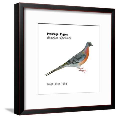 Passenger Pigeon (Ectopistes Migratorius), Birds-Encyclopaedia Britannica-Framed Art Print