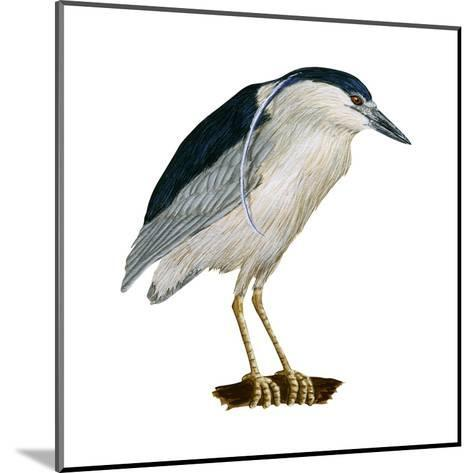 Black-Crowned Night Heron (Nycticorax Nycticorax), Birds-Encyclopaedia Britannica-Mounted Art Print
