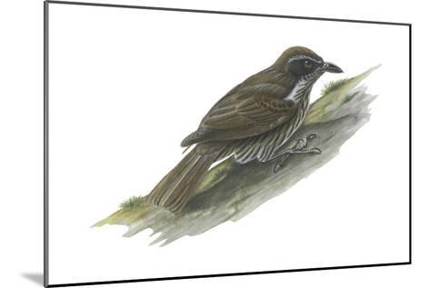Philippine Creeper (Rhabdornis Inornatus), Birds-Encyclopaedia Britannica-Mounted Art Print