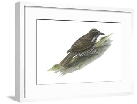 Philippine Creeper (Rhabdornis Inornatus), Birds-Encyclopaedia Britannica-Framed Art Print