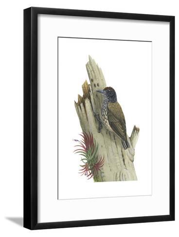 White-Scaled Piculet (Picumnus Albosquamatus), Birds-Encyclopaedia Britannica-Framed Art Print