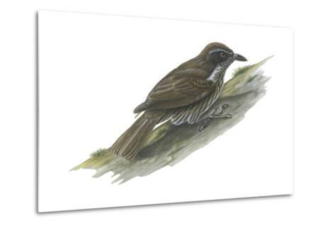 Philippine Creeper (Rhabdornis Inornatus), Birds-Encyclopaedia Britannica-Metal Print