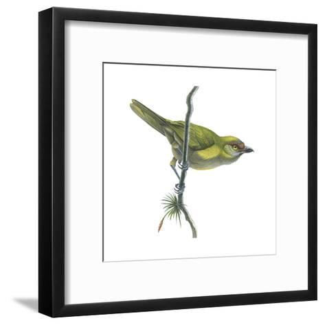 Peppershrike (Cyclarhis Nigrirostris), Birds-Encyclopaedia Britannica-Framed Art Print