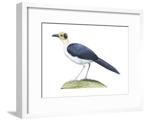 White-Necked Rockfowl (Picathartes Gymnocephalus), Birds-Encyclopaedia Britannica-Framed Art Print