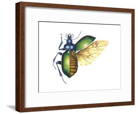 Ground Beetle (Carabidae), Insects-Encyclopaedia Britannica-Framed Art Print