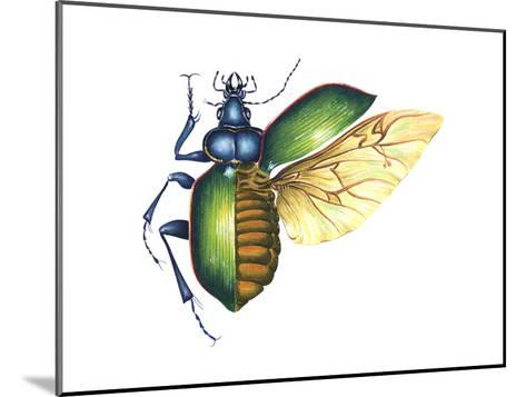 Ground Beetle (Carabidae), Insects-Encyclopaedia Britannica-Mounted Art Print