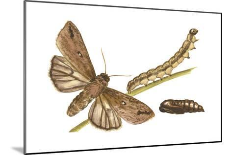 Armyworm Moth, Caterpillar, and Pupae (Mythimna Unipuncta), Insects-Encyclopaedia Britannica-Mounted Art Print