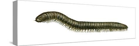 Millipede (Julus Terrestris), Arthropods, Invertebrates-Encyclopaedia Britannica-Stretched Canvas Print