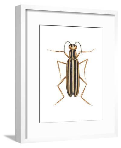 Striped Blister Beetle (Epicauta Vittata), Insects-Encyclopaedia Britannica-Framed Art Print