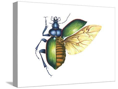 Ground Beetle (Carabidae), Insects-Encyclopaedia Britannica-Stretched Canvas Print