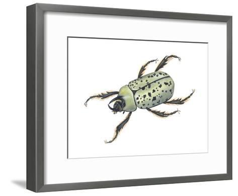 Rhinoceros Beetle (Dynastes Tityus), Unicorn Beetle, Insects-Encyclopaedia Britannica-Framed Art Print