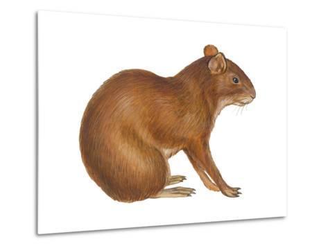 Agouti (Dasyprocta Aguti), Mammals-Encyclopaedia Britannica-Metal Print