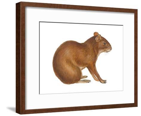 Agouti (Dasyprocta Aguti), Mammals-Encyclopaedia Britannica-Framed Art Print