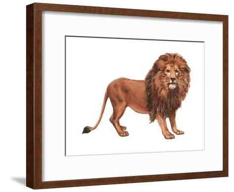 African Lion (Felis Leo Massaica), Mammals-Encyclopaedia Britannica-Framed Art Print