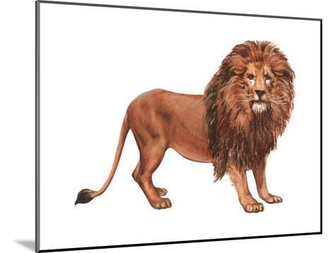 African Lion (Felis Leo Massaica), Mammals-Encyclopaedia Britannica-Mounted Art Print