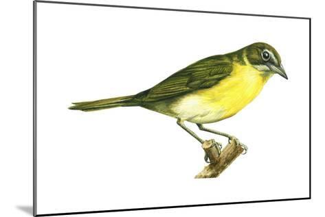Yellow-Breasted Chat (Icteria Virens), Birds-Encyclopaedia Britannica-Mounted Art Print