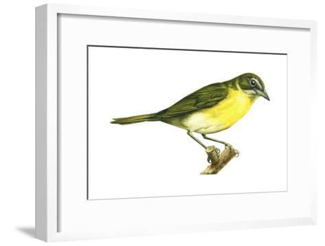 Yellow-Breasted Chat (Icteria Virens), Birds-Encyclopaedia Britannica-Framed Art Print